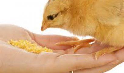 抗生素饲料使用的是与非