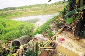 养猪场污水直排水塘。
