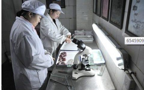 记者揭秘生猪屠宰厂生产全过程(一)
