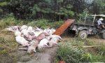 茶陵一养猪场遭雷击:一人受伤171头猪死亡 损失近30万