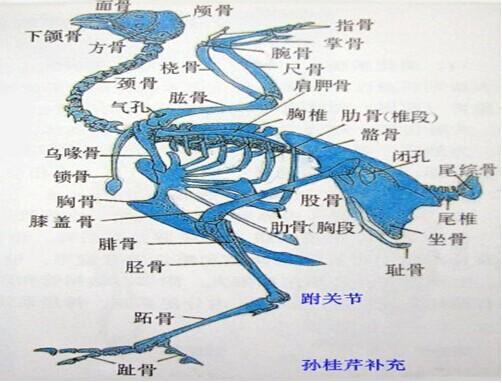 中国地图点状矢量图