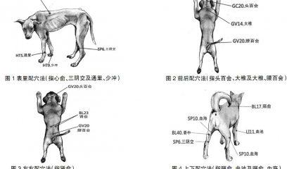 简述低周波电疗法在犬的应用