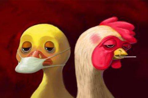 H9亚型禽流感小常识