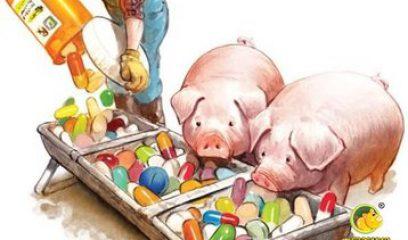 【兽药安全使用小百科】第7期|兽药抗菌药安全性评价内容及相关概念