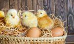 北京两批鸡蛋检出兽药成分 购买需谨慎