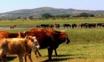 为什么要使用牛流行热疫苗?