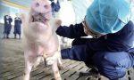 市场 | 猪周期的魔咒