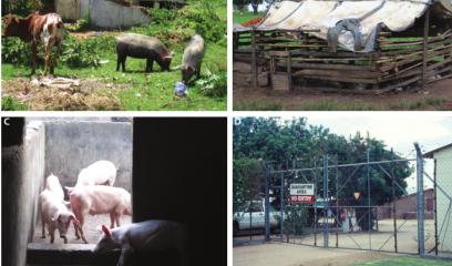 佳木斯市、芜湖市、宣城市各发生一起非洲猪瘟疫情