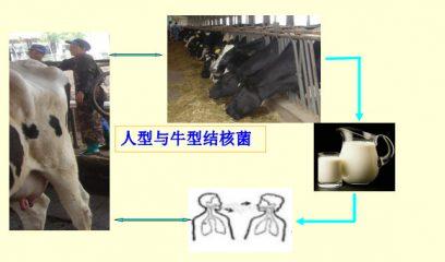 【防控专题】牛结核病病原体和形态结构流行特点