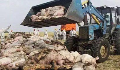 非洲猪瘟背景下的公共卫生安全防控怎么做?