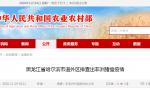 黑龙江省哈尔滨市道外区排查出非洲猪瘟疫情