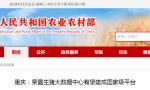 重庆:荣昌生猪大数据中心有望建成国家级平台