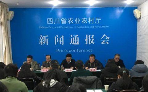 四川省农业农村厅:5起非瘟疫情均因泔水引起,已扑杀生猪约3.5万头