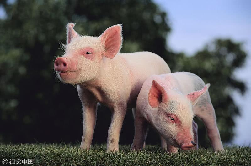新疆96个县(市、区)划定畜禽养殖禁养区0