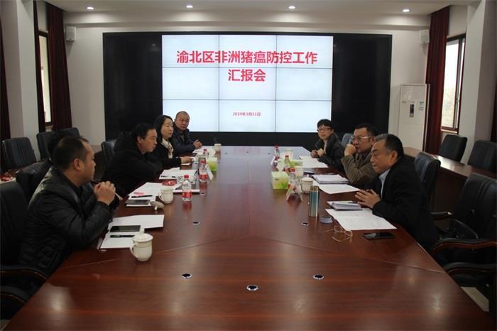 重庆市农委调研渝北非洲猪瘟防控工作