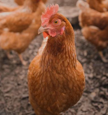 河南政协建言提升畜禽粪肥利用水平