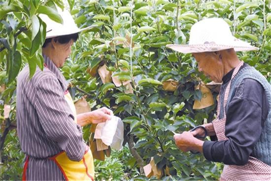 [经济日报]   水果供给有保障价格将趋稳