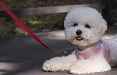 """饲料所专家走进南和 助力宠物产业发展 打造""""中国宠物产业之都"""""""