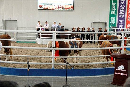 农科院牧医所助推肉牛种业振兴 第二届全国种公牛拍卖会