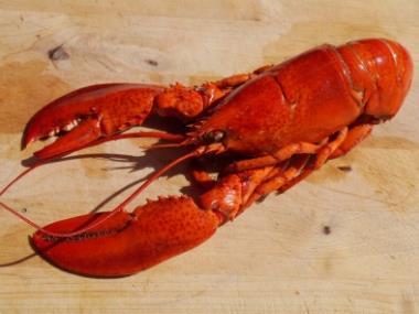 《小龙虾产业发展报告(2019)》小龙虾产业总产值达3690亿元