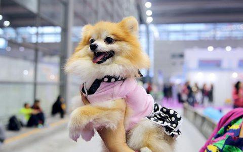 2021中国国际宠物医疗及连锁加盟展览会