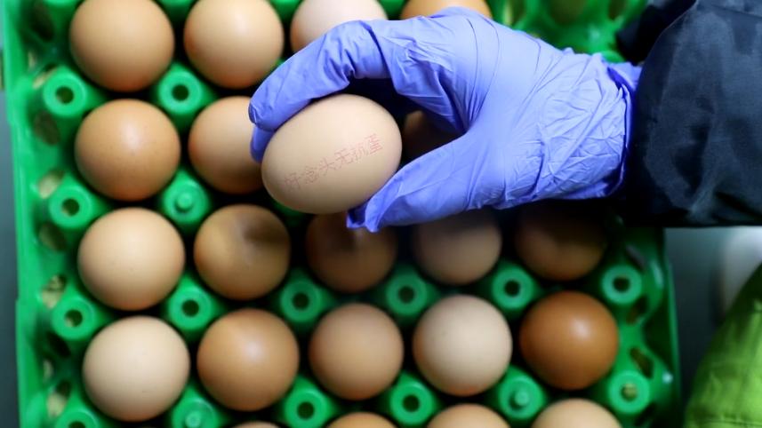 新联禽业,有舍、有悟、有拓的蛋鸡一条龙企业