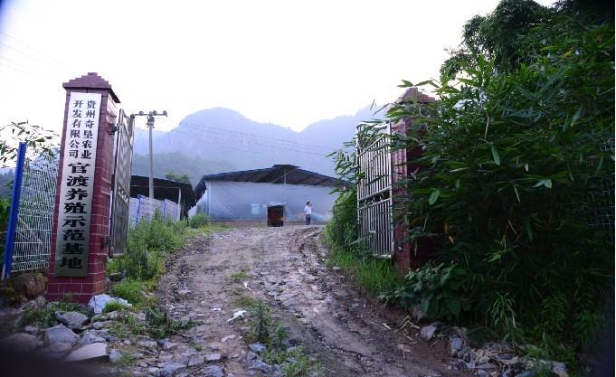 占天时,创地利,保品质,立品牌——奇垦农业打造贵州本土竹乡鸡