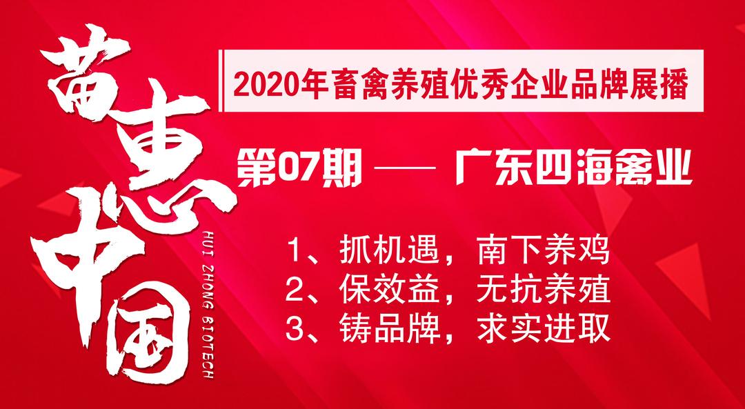 【苗惠中国】新鲜无抗、绿色养殖、求实进取 ——访广东四海蛋鸡养殖专业合作社